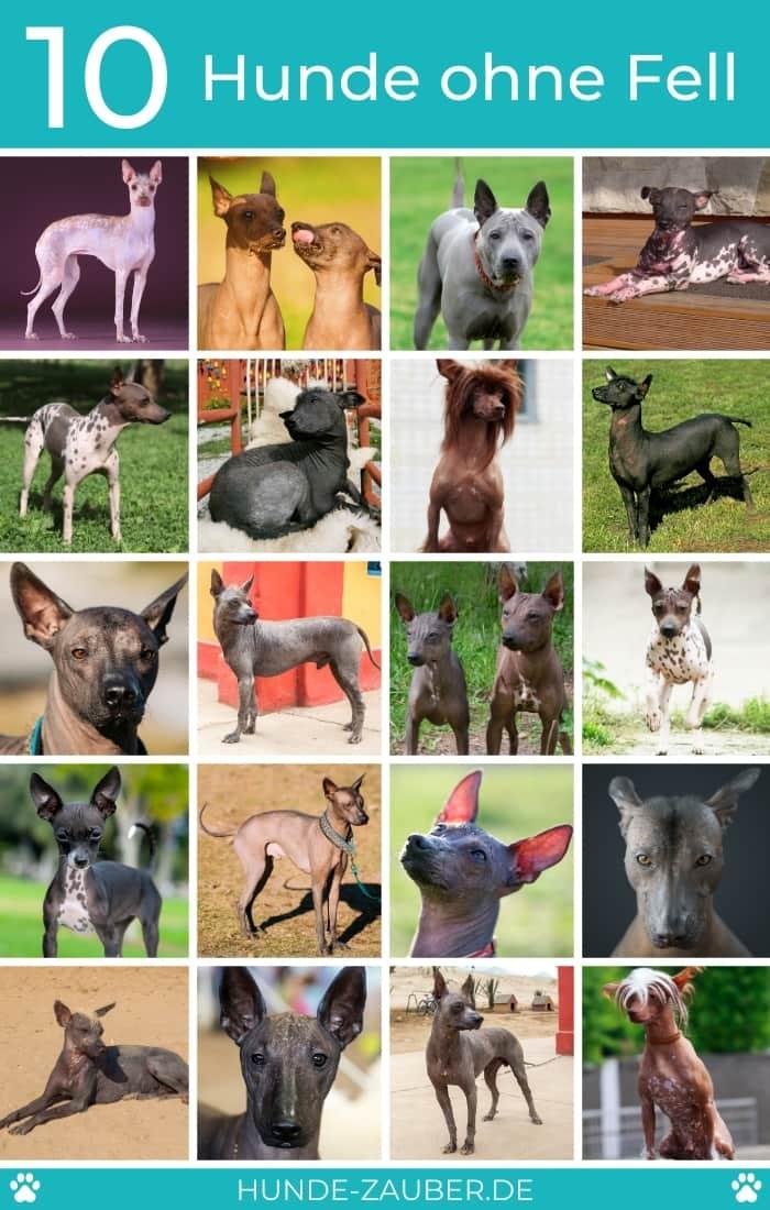 10 Hunde ohne Fell