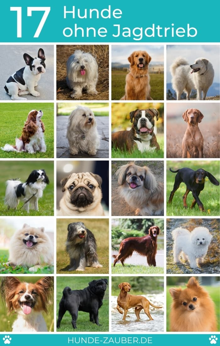 17 Hunde ohne Jagdtrieb