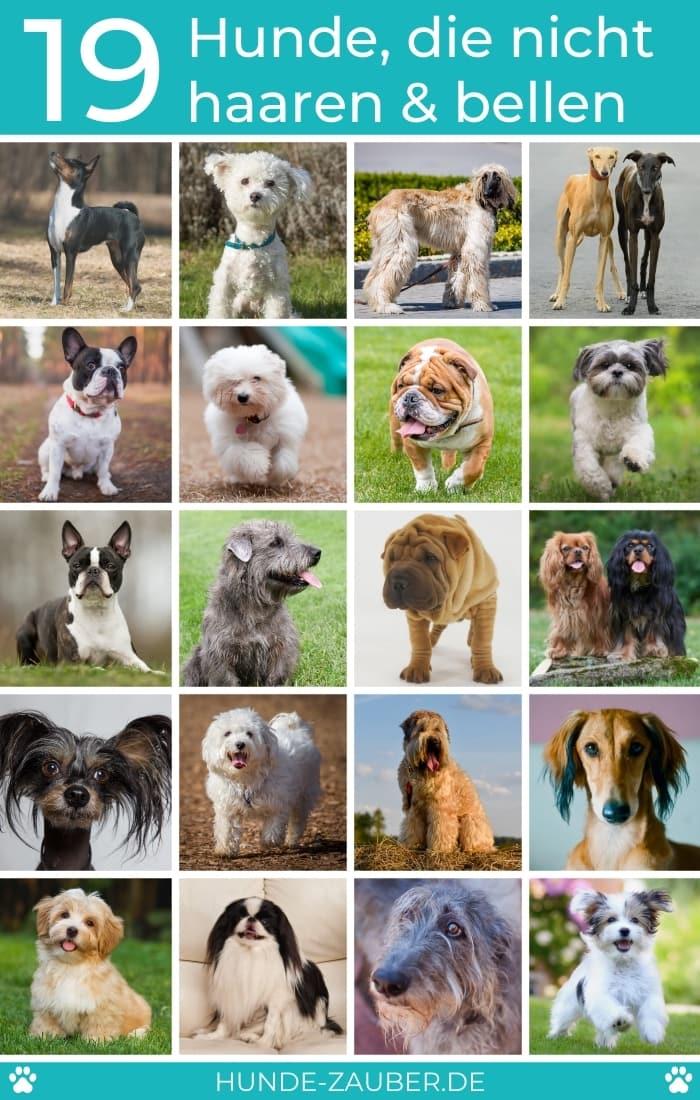 19 Hunde, die nicht haaren und bellen