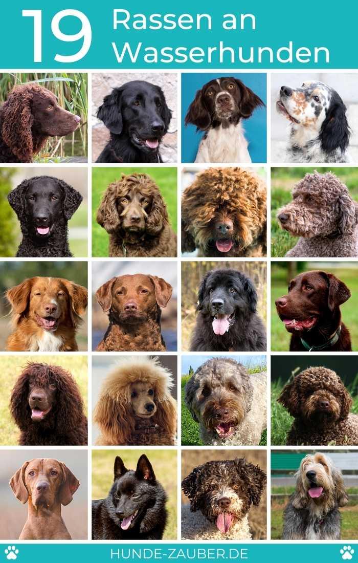 19 Rassen an Wasserhunden