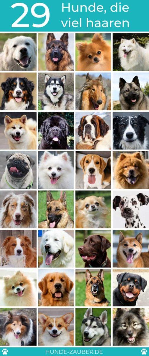 29 Hunde die viel haaren