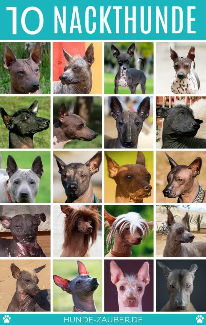 10 Nackthunde