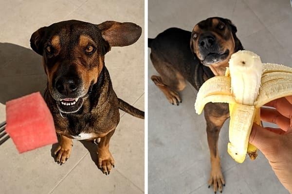 Hund mit Obst als Leckerli