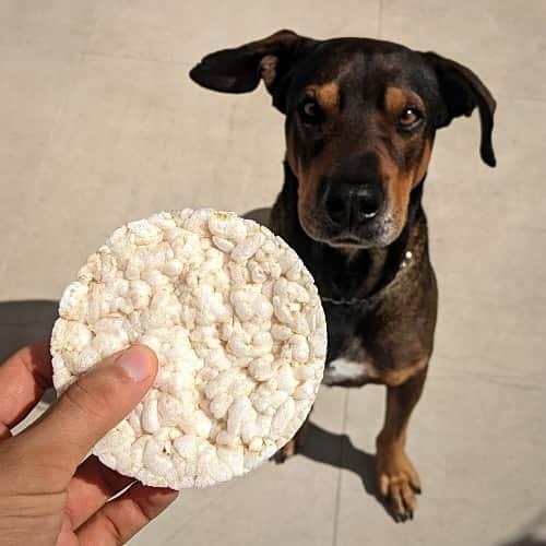 Hund mit Reiswaffel