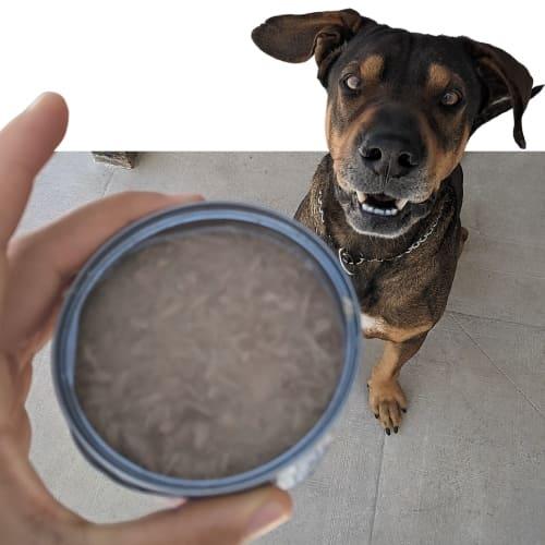Hund mit Thunfischdose