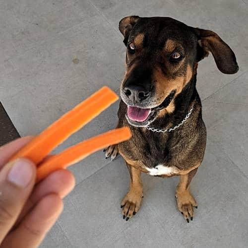 Karotten als Hundeleckerli