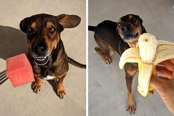 Obst für Hunde als Leckerli