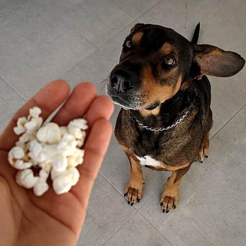 Popcorn für Hund