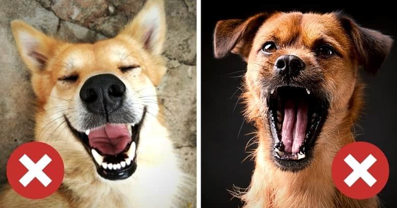 Reaktion von Hunde auf Kitzeln