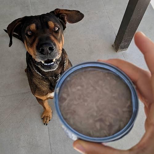 Thunfisch für Hund