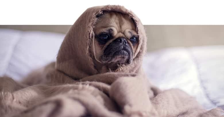 Erkälteter Hund