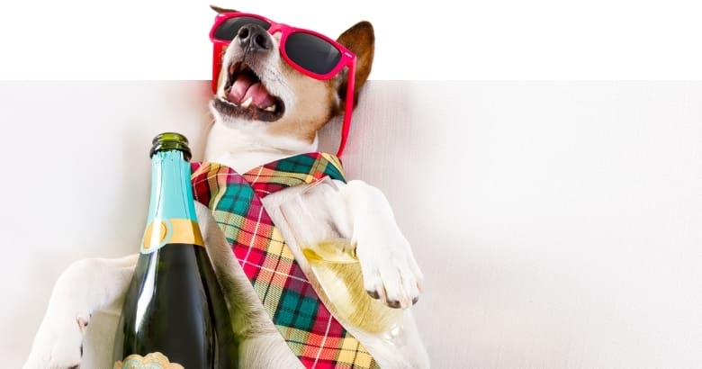 Hund mit Alkohol