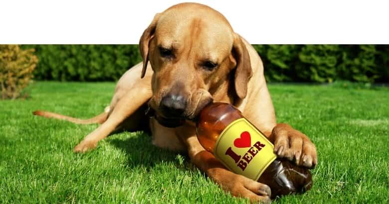 Hund mit Bier