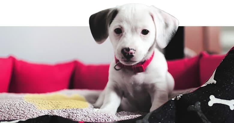 Hund pinkelt in Körbchen