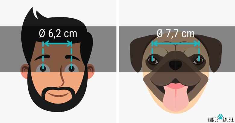 Abstand der Augen von Hunden und Menschen