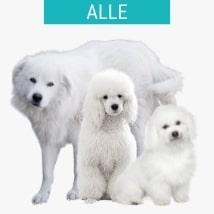 Alle weißen Hunderassen