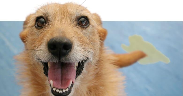 Aufgeregter Hund hat uriniert