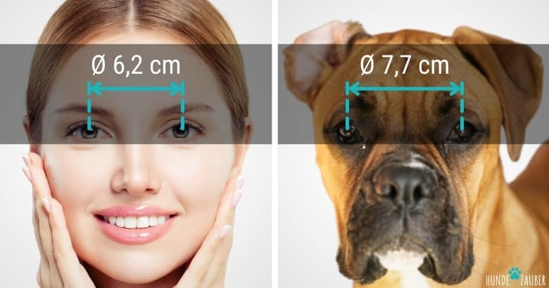 Augenabstand von Hunden im Vergleich zu Menschen