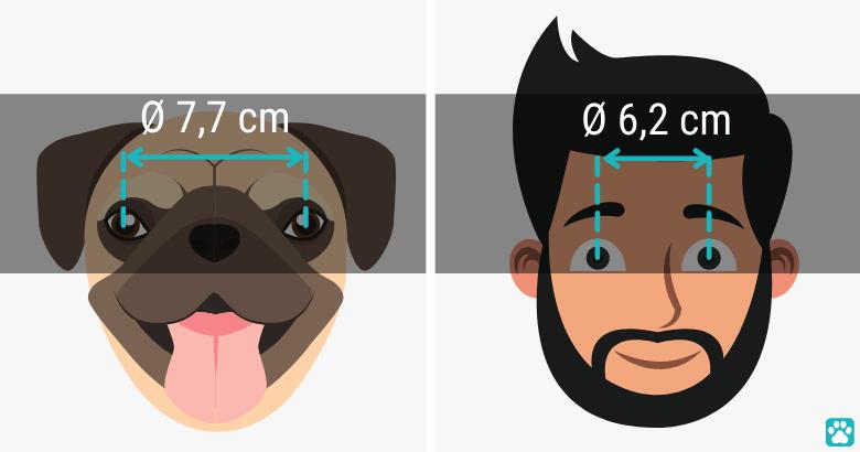 Augenabstand von Menschen im Vergleich zu Hunden