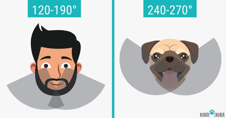 Blickwinkel von Hunden im Vergleich zu Menschen