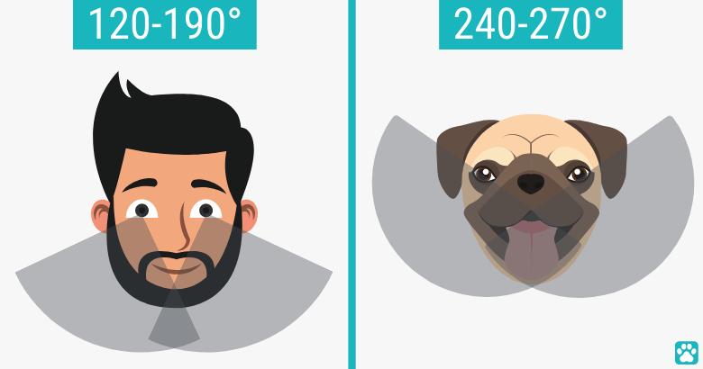 Blickwinkel von Hunden und Menschen