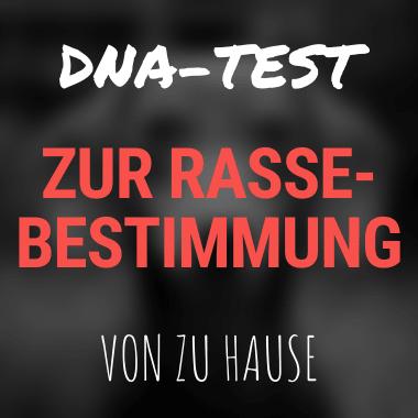 DNA-Test zur Rassebestimmung