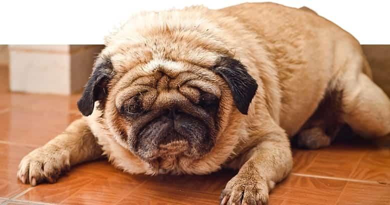 Depressiver Hund