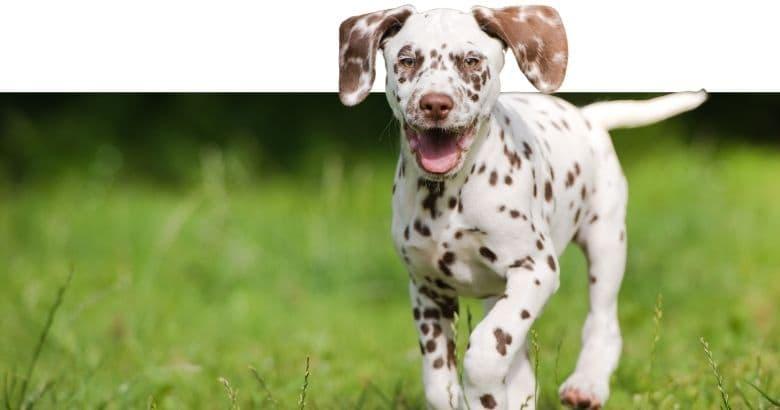 Gehender Hund