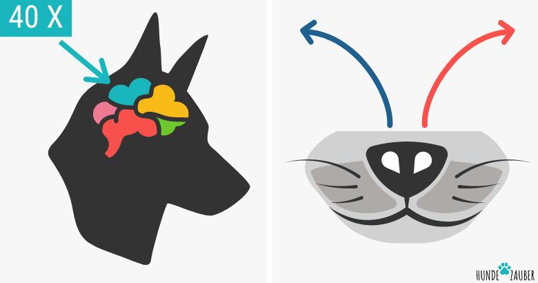 Geruchssinn von Hunden