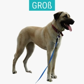 Große Schäferhunde
