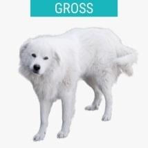 Große weiße Hunderassen
