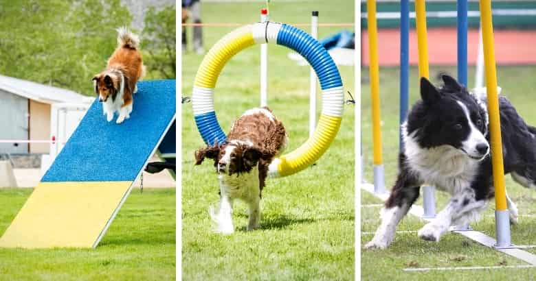 Hindernisse bei Hundewettbewerben