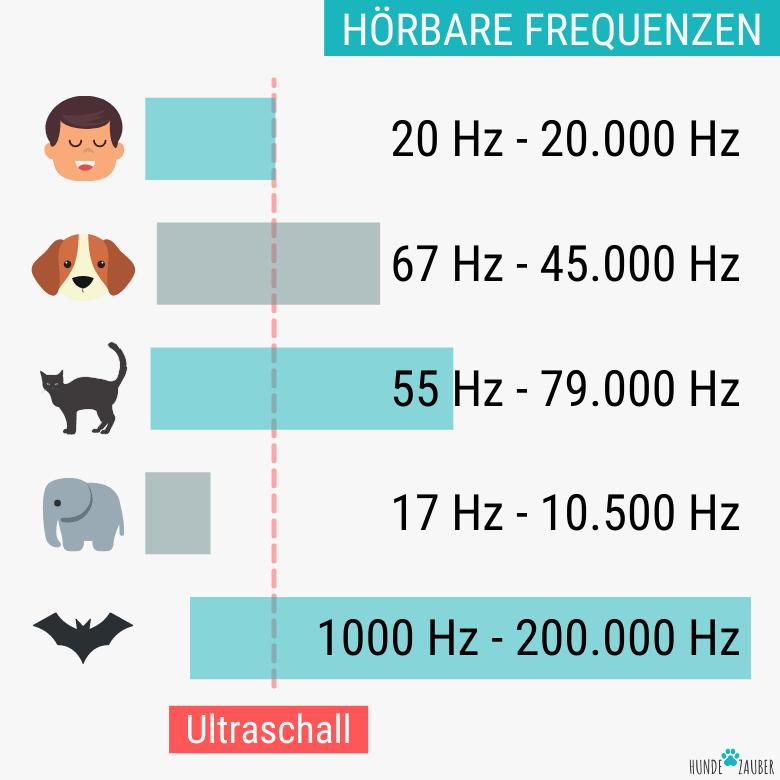 Hörbare Frequenzen von Hunden im Vergleich zu Menschen und anderen Tieren