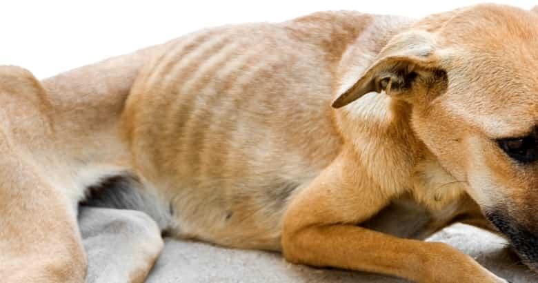 Hund am Hungern
