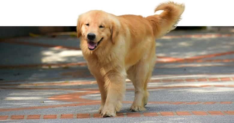 Hund am Laufen