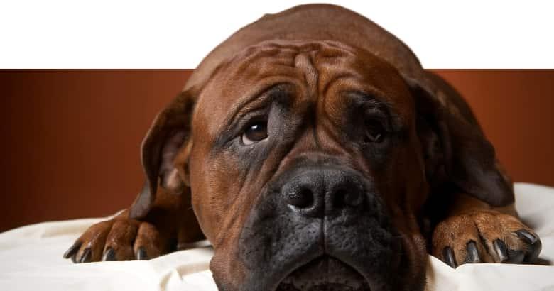 Hund am Trauern