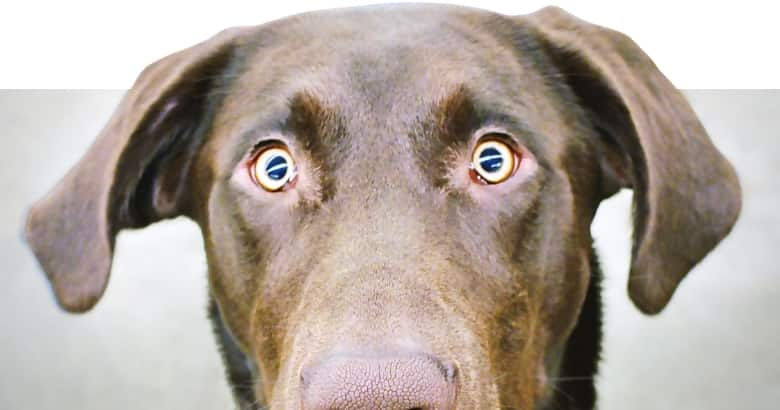 Hund blickt komisch