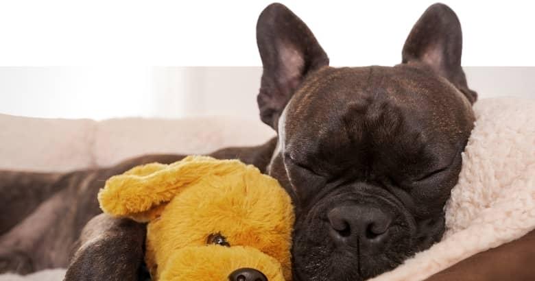 Hund im Traum