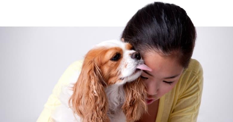 Hund leckt Herrchen ab