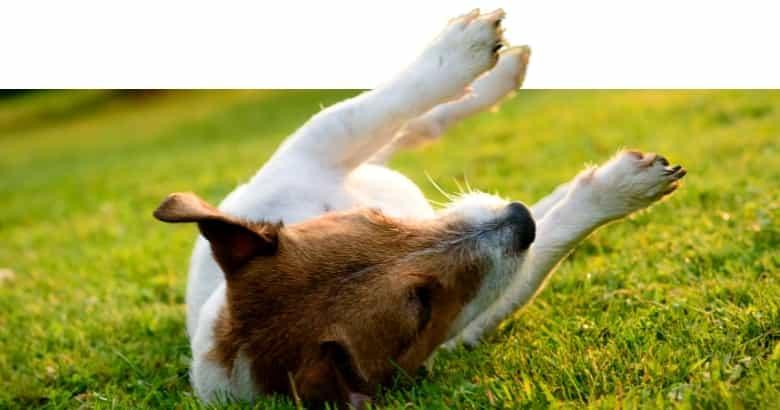 Hund mit Krampf