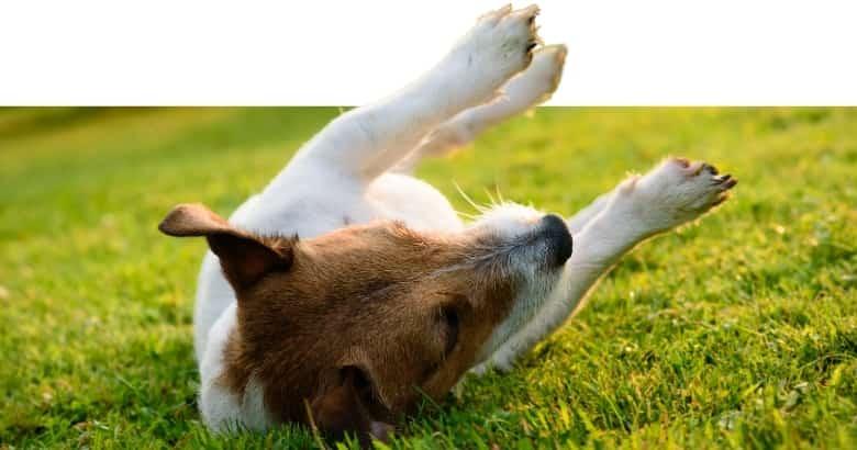Hund mit Krampfanfall