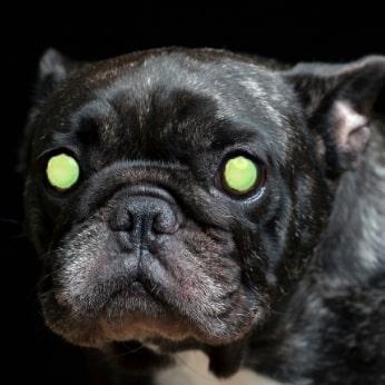 Hund mit leuchtenden Augen