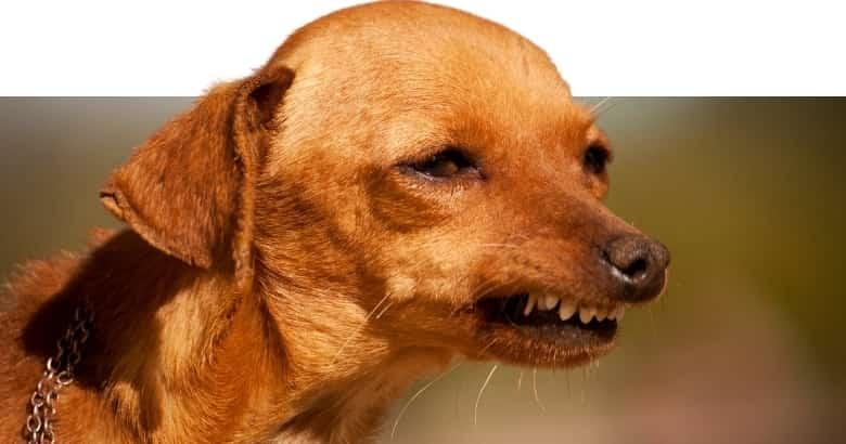 Hund schaut komisch