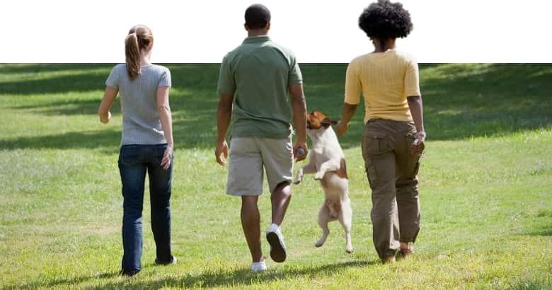 Hund springt Herrchen an