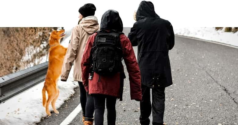 Hund springt Menschen an
