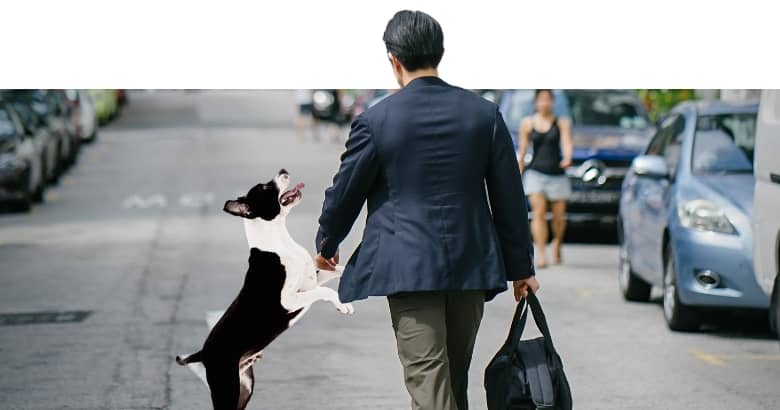 Hund springt an Mann hoch