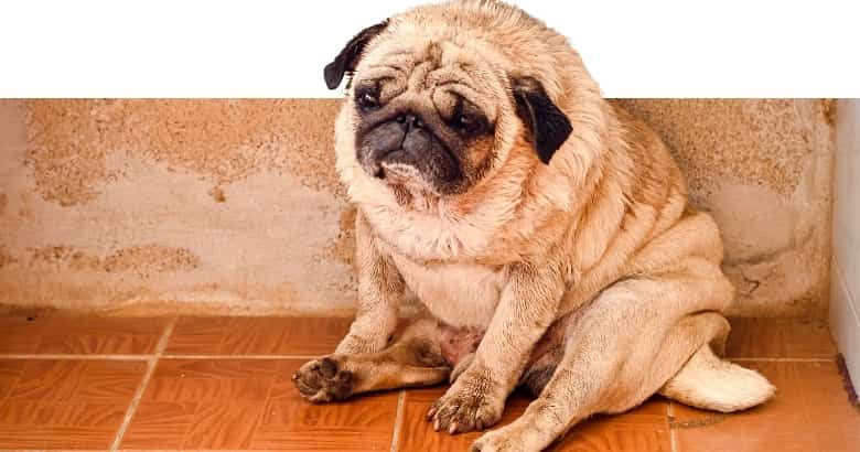 Hund traurig