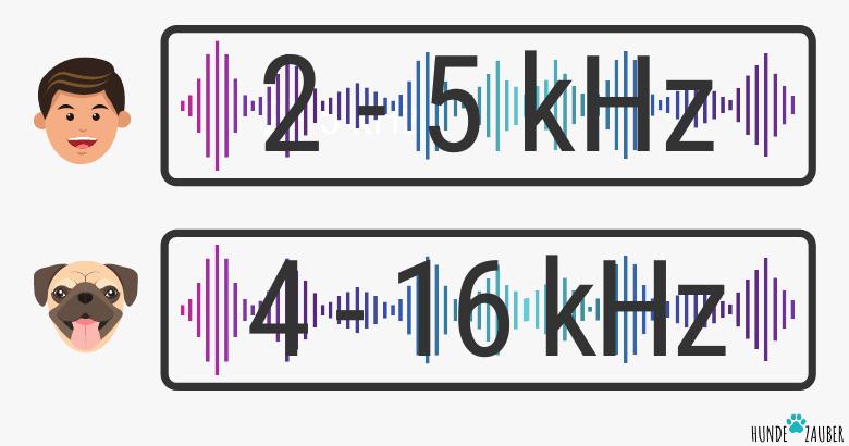 Ideale Hörfrequenz von Hunden und Menschen