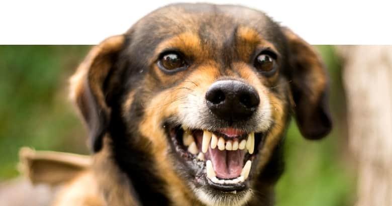 Knurrender Hund
