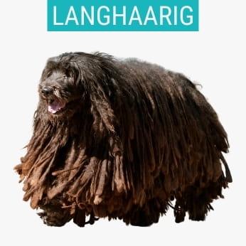 Langhaarige Schäferhunde